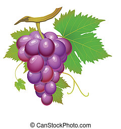 Purple grape cluster with green leaves isolated