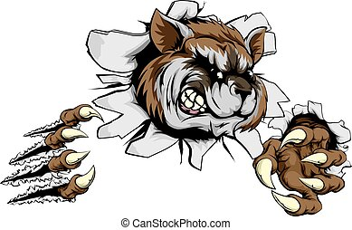 Raccoon claw breakthrough