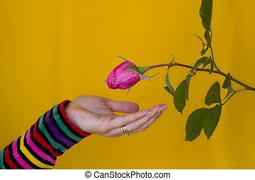 Receiving a flower