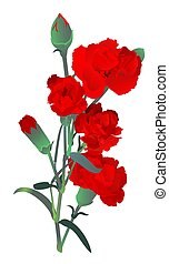 Red carnation flowers bouquet isolated on white background