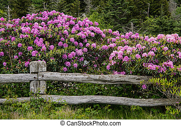 Rhododendron Blanket Rail Fence
