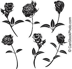 Rose flower vector graphics