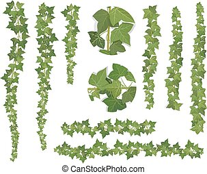 set of brushes ivy vine branches
