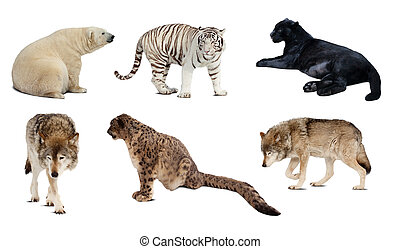 Set of Carnivora mammal. Isolated over white background with shade