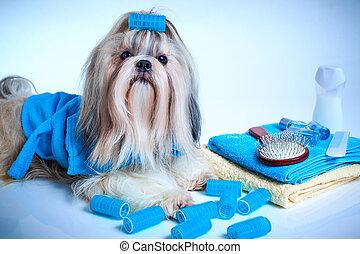 Shih tzu dog washing