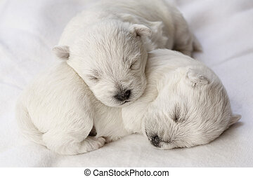 Adorable sleeping puppies, only a few days old