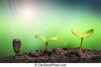 Small plant on pile of soil with Lens flare, green nature concep