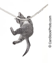 cat baby hanging on rope