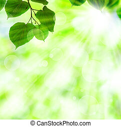 Spring sun beam with green leaves over shiny lights background