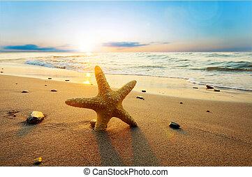 Starfish on the sunny summer beach. Vacation, holidays