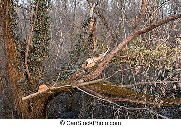 Broken tree in the forest