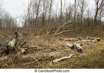 Storm damage in a forest.