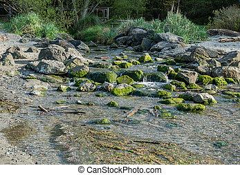 Stream And Shoreline 5