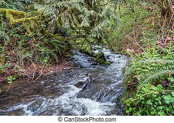 Stream Wiith Bridge 2
