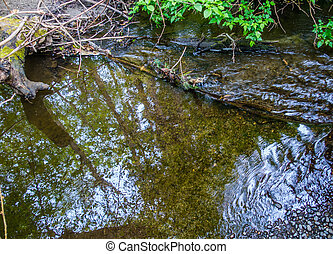 Stream With Reflection