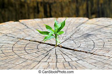 strong seedling growing in the center trunk from a dead tree stump, business concept of emerging leadership success generating new business.