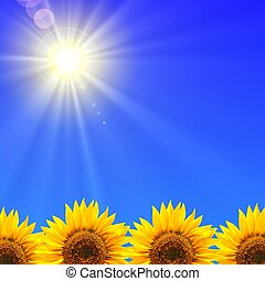 summer holidays or vacation concept with blue sky and sunflowers
