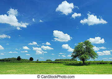 Meadow and tree