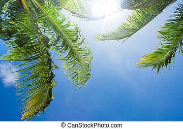 sun shining through palm tree leaves