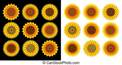 Sunflower vector cartoon icon set for print design. Vector illustration flower on white and on black background. Isolated cartoon set icon sunflower.