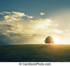 Beautiful sunset behind single tree in a grassy field.