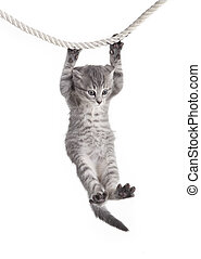 tabby cat hanging on rope