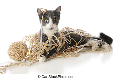 A gray and white cat looking perplexed as he's tangled in a ball of yarn. Isolated on white.