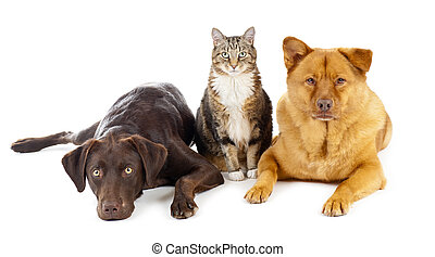 Cat and dogs together