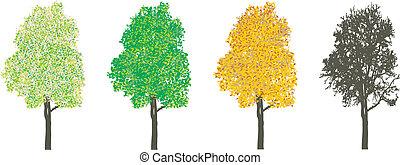 Tree at four seasons