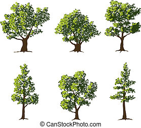 Collection of six fully grown shade trees.