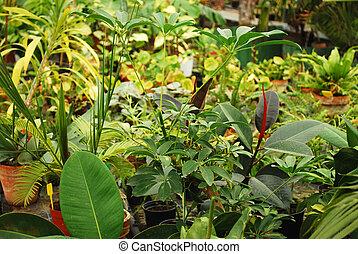 Tropical flora in botanical garden in Timisoara in Romania
