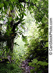 Lush foliage in tropical forest