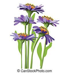 vector floral design, purple aster