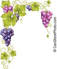 Vector grape frame
