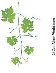 grape vine and leaves