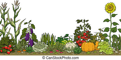 Vegetable garden bed on a white background vector illustration