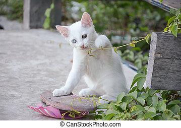 white thai kitten