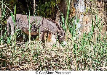 Wild donkey in the desert