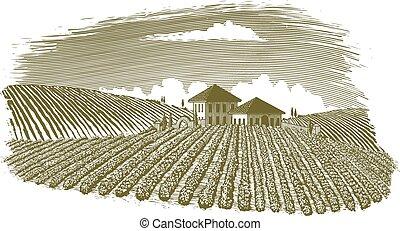 Woodcut-style illustration of a vineyard landscape.