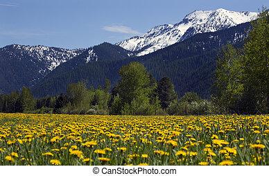 Yellow Flower Farm Snow Mountain Countryside Montana