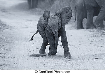 Young elephant play on a road while family feed artistic conversion