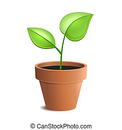 Young Green Plant in Pot Isolated on the White Backgrounds. Vector illustration
